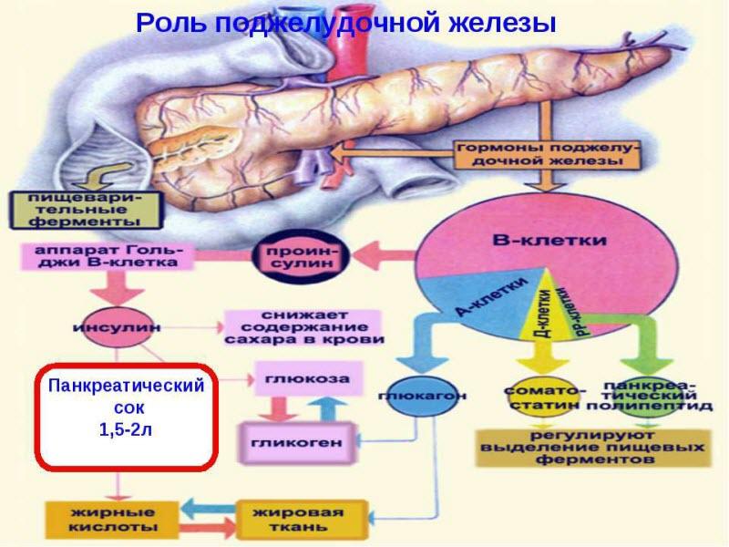 Как лечить недостаточность поджелудочной железы