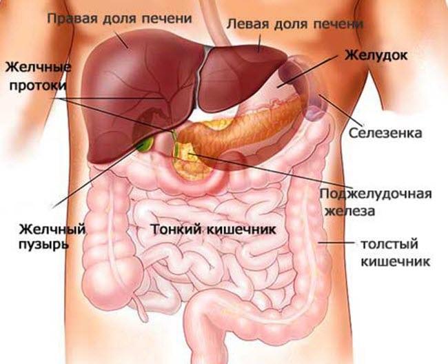 Как устроена поджелудочная железа