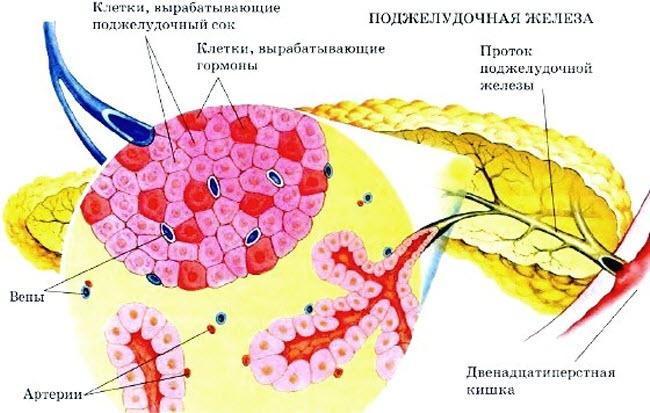 nedostatok-fermentov-podzheludochnoj-zhelezy1
