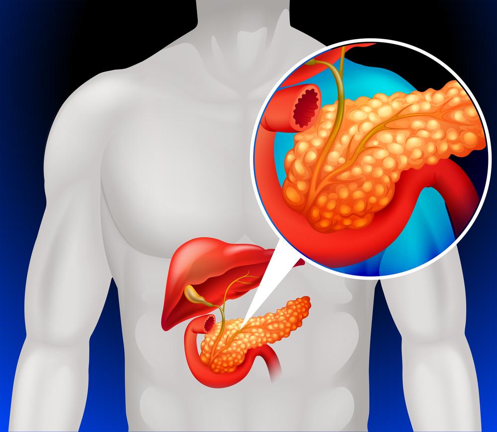 Важность поджелудочной железы