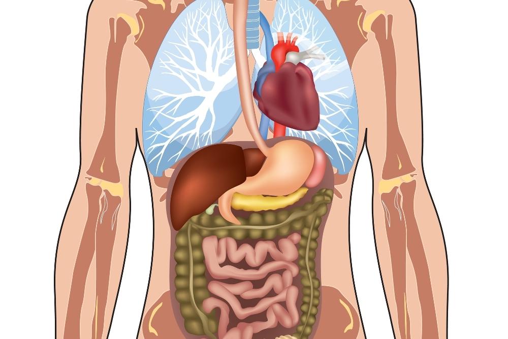 Что такое сальниковая сумка поджелудочной железы