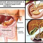 Значение, роль поджелудочной железы и печени в пищеварении человека