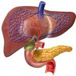 Причины и симптомы заболевания желчного пузыря и поджелудочной железы