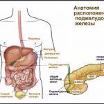 За что отвечает поджелудочная железа в организме человека