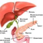 Поджелудочная железа: где находится и как болит