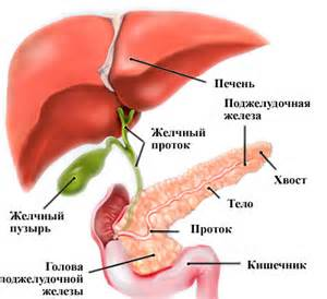 Лечение поджелудочной железы