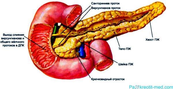 Вирусные гепатиты механизм передачи