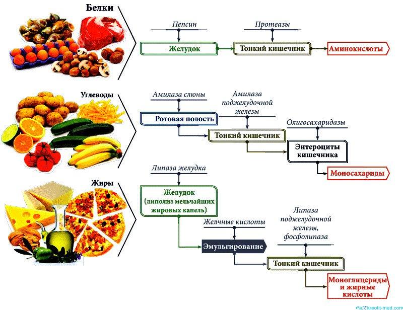 Какие препараты можно принимать для похудения