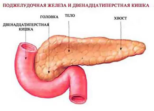 deformaciya-podzheludochnoj-zhelezy