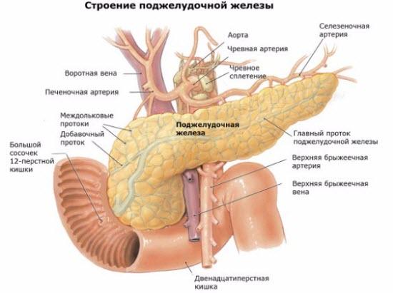 Что развивается при гипофункции и гиперфункции поджелудочной железы