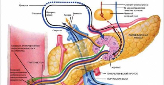 Лечение острого панкреатита. Симптомы и признаки хронического панкреатита. Сироп Дигестин - хорошо сбалансированная комбинация специфических пищеварительных Таблетки Панкреатин 8000 - полиферментный препарат. Входящие в состав препарата...