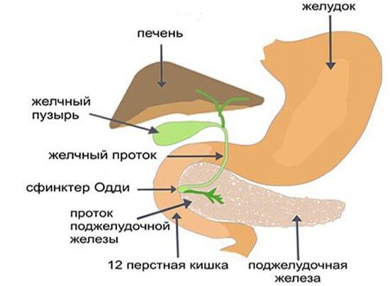 Чеснок при панкреатите: можно или нет добавлять в блюда