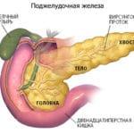 Как восстановить поджелудочную железу при сахарном диабете