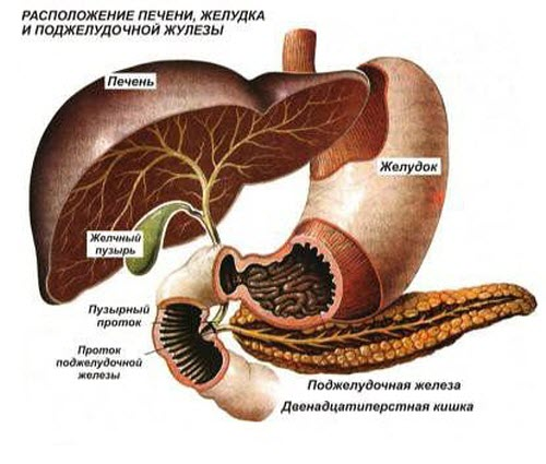 Проблемы с поджелудочной железой: симптомы и лечение